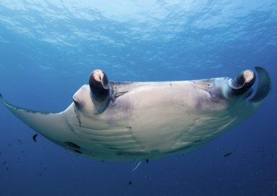kuredu-island-maldives-resort-manta-snorkel