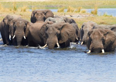 vic-falls-elephants-cross-river