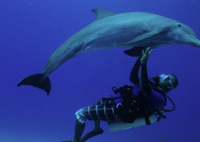 maldives-scuba-diving-with-dolphin